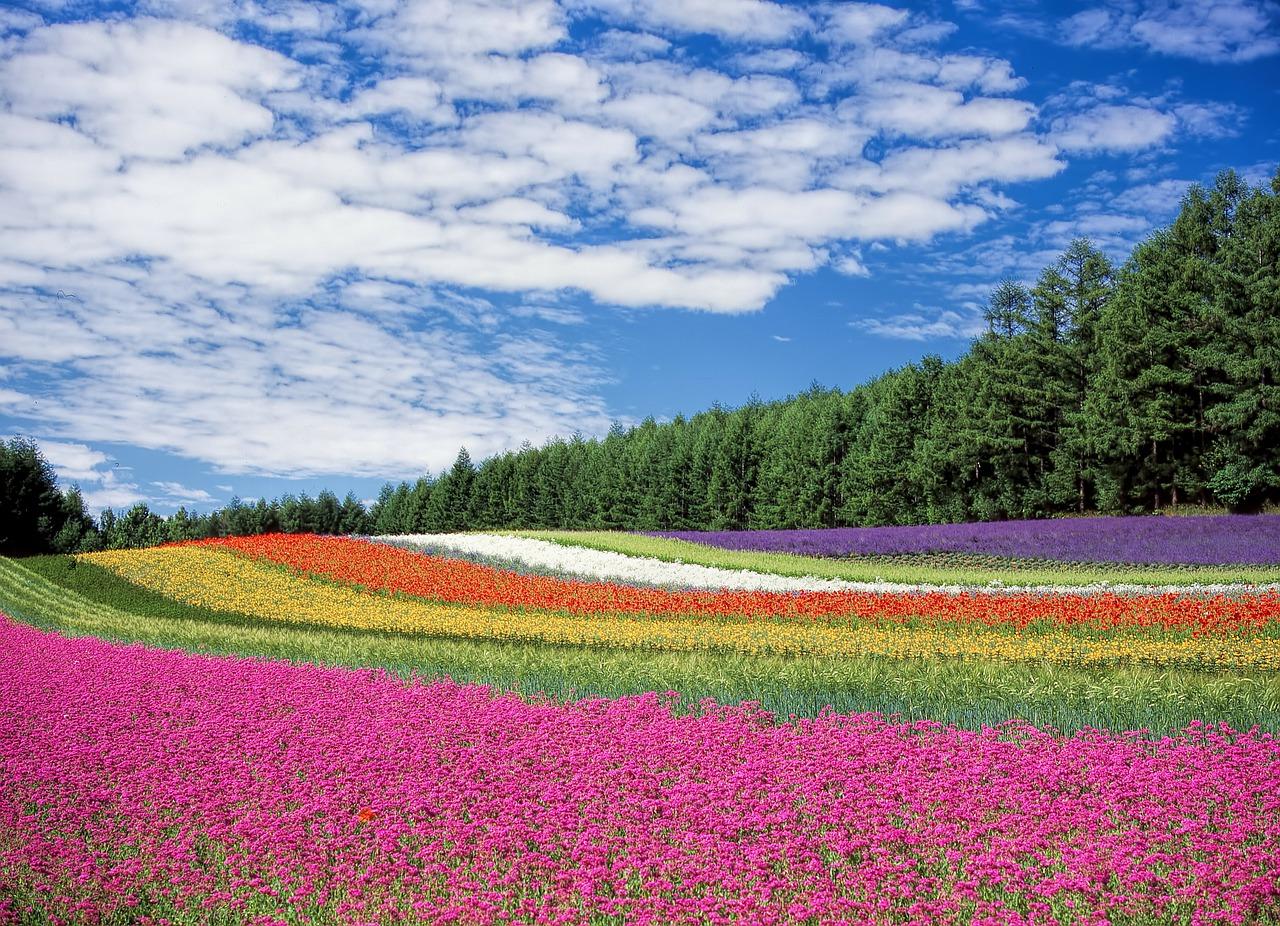 どこまで知ってる?レベル別、花と植物の英単語まとめ